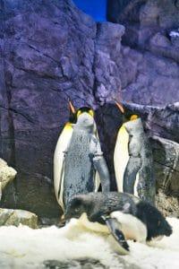 南極の三賢者